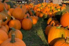 fowler-pumpkin-patch